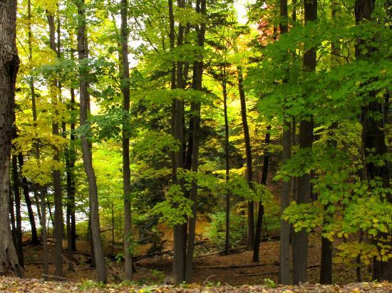 Durand Eastman Park: Durand Woods