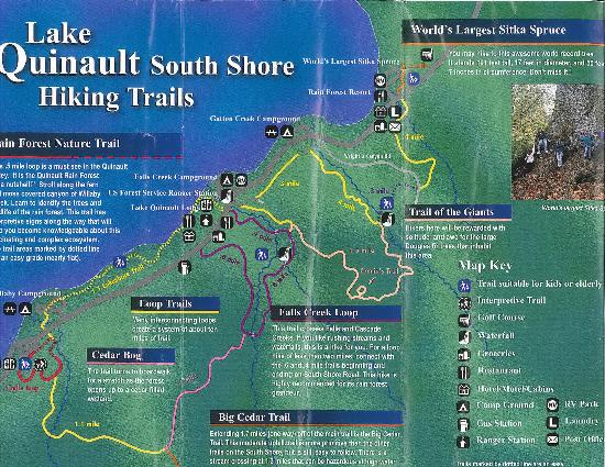 Quinault Rain Forest: Loop trails on south shore
