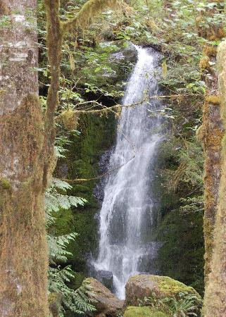 Quinault Rain Forest 사진