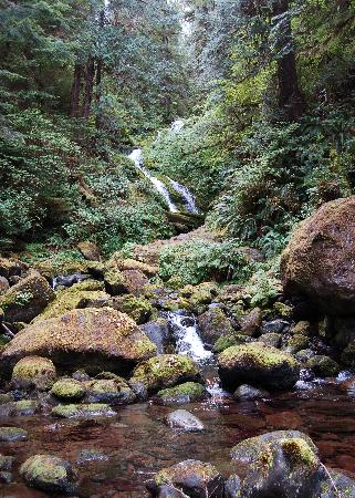 Quinault Rain Forest: Bunch Falls