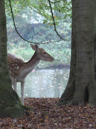 Kasteel de Essenburgh: Een van de herten in het kasteelpark