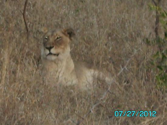 Tangala Safari Camp: Lioness surveying her territory