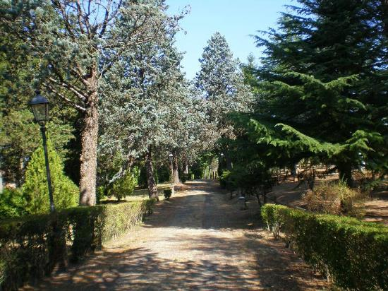 Hotel Torre Dei Calzolari Palace: Viale d'accesso