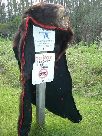 Alligator River National Wildlife Refuge: It was explained that this bear skin came from either a dead animal or taken from a poacher