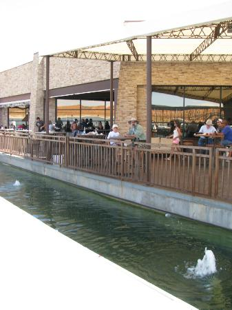 Antelope Point Marina Village: Outdoor seating where you can look at the fish
