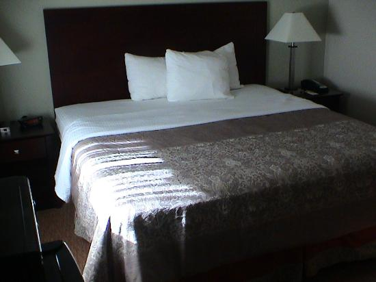 Super 8 Coos Bay/North Bend: Clean and neat linens on the bed with the evening sun shining in through the window