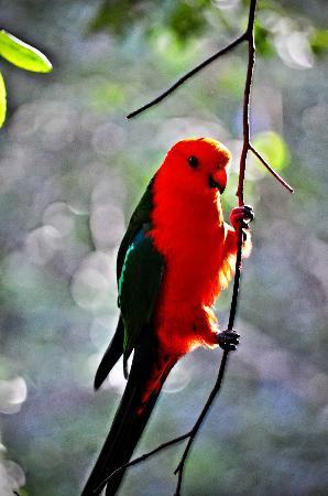 Narrows Escape Rainforest Retreat : Spectacular birdlife