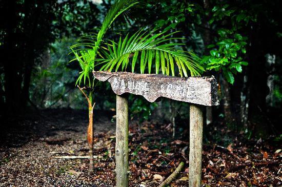 Narrows Escape Rainforest Retreat : Explore our nature trail