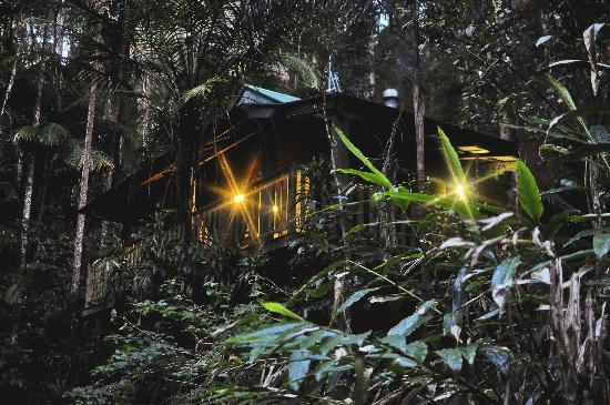 Narrows Escape Rainforest Retreat: Wake up to filtered sunlight through the forest