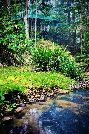 Narrows Escape Rainforest Retreat: Explore the rainforest