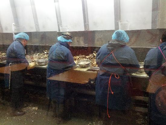 Bay City, OR: Shuckers at work, behind glass