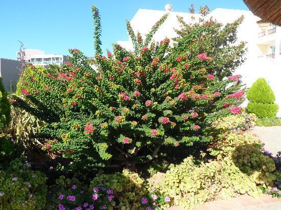 Dimitra Beach Hotel: quelques jardins fleuris et bien entretenu