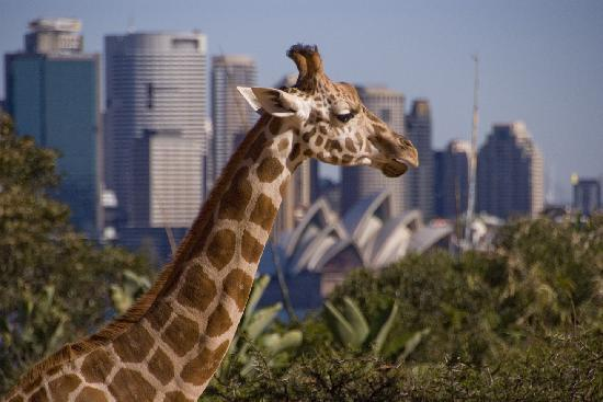Photo of Zoo Taronga Zoo at Bradleys Head Rd, Mosman, Ne 2088, Australia