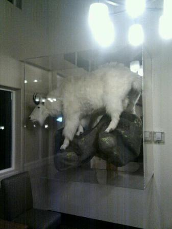 Breeze Inn: Goat