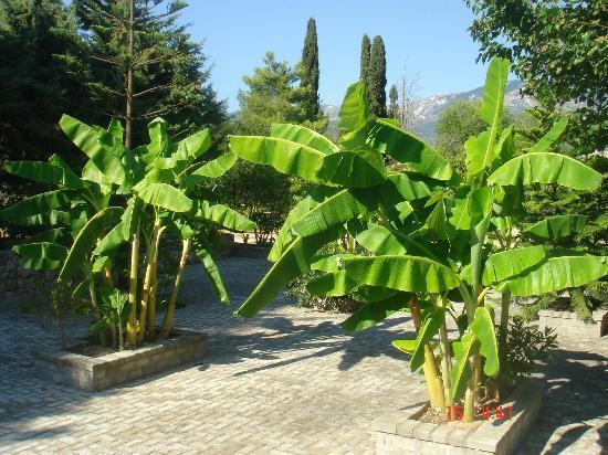Gerry's Apartments and Casetta Andreas: giardino