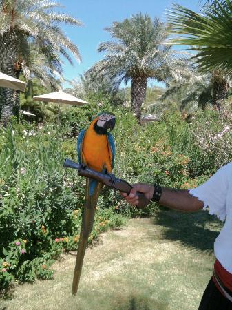 Marti Myra Hotel: parrot