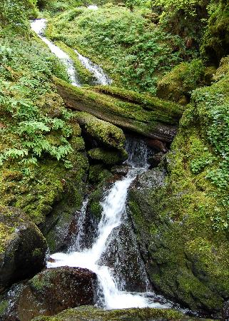 Quinault Rain Forest: Upper section of Bunch Falls.