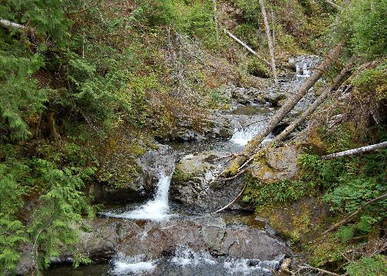 Quinault Rain Forest照片