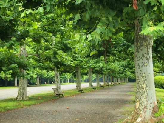 Shinjuku Gyoen National Garden: パリの公園みたい!