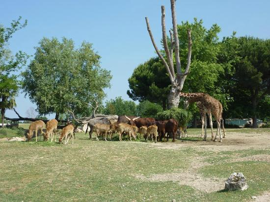 parco natura viva verona video tour - photo#29
