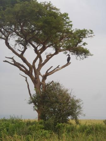 African Adventure Travellers Day Tours: A bird in a tree!