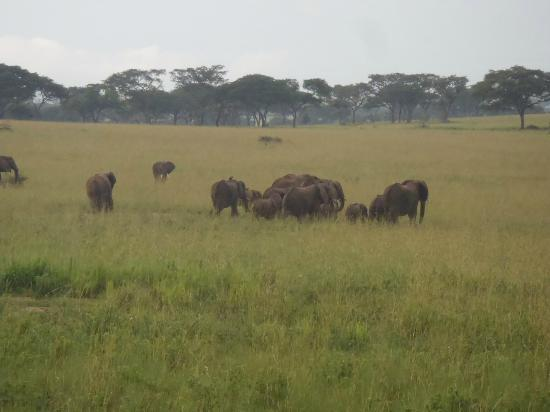 African Adventure Travellers: Elephants
