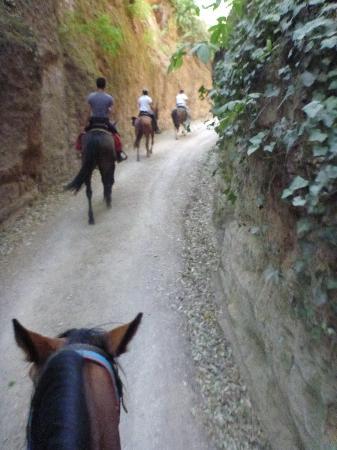 Maneggio Belvedere: passaggio in una via cava etrusca