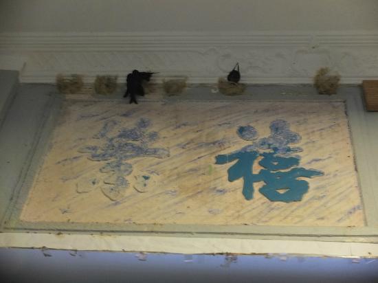 Hotel Puri: Des hirondelles