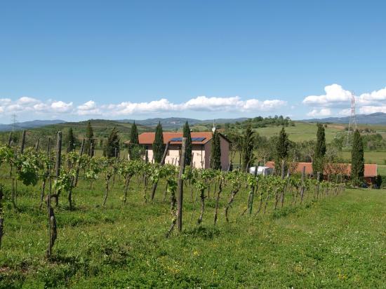 Agriturismo Agricampeggio Podere Mulinaccio: View from back of Podere