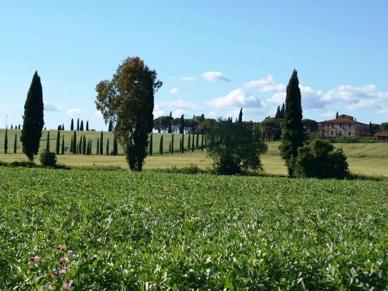 Agriturismo Agricampeggio Podere Mulinaccio: view around the corner