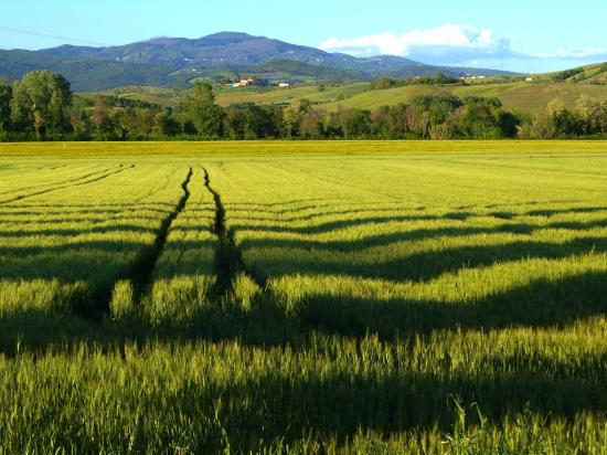Agriturismo Agricampeggio Podere Mulinaccio: Across the road