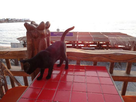 Neptune Hotel: ひとなつっこい黒ネコ