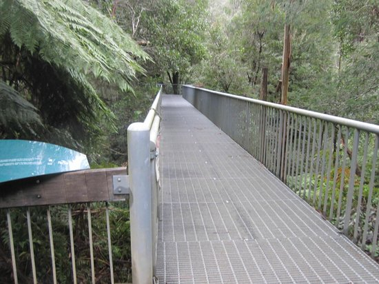 Warburton, Australie : the skybridge