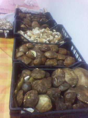 i funghi porcini del Monte LIMBARA........