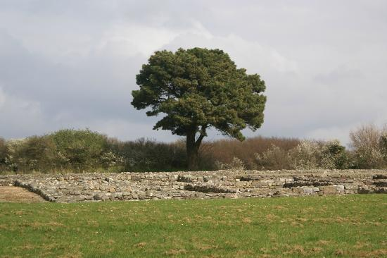 Segontium Roman Fort: Only a brief view of foundations
