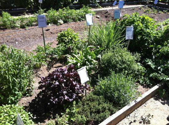 Bardessono: Kitchen garden