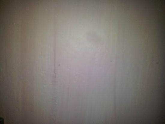 Le Tropic Hotel: fourmis mortes collées au mur