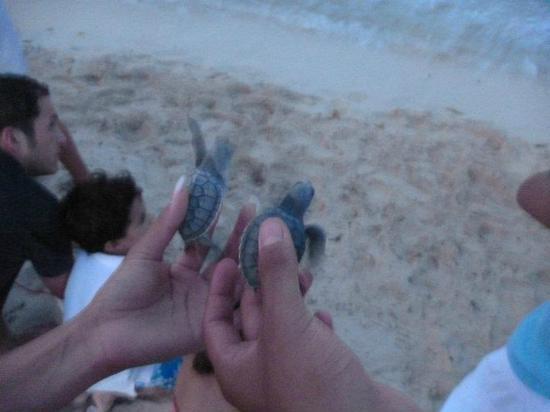 Mayan Palace Riviera Maya: Liberación de tortugas
