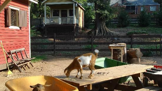 The Social Goat Bed & Breakfast: The animal area...my favorite place!