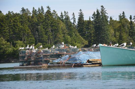 Seascape Kayak Tours Inc.: Pretty, peaceful view