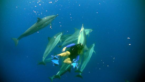 Coral Reef Snorkel Adventures