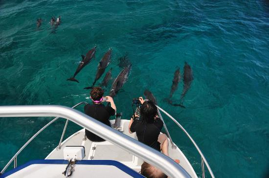 Coral Reef Snorkel Adventures : Dolphins join our boat everyday