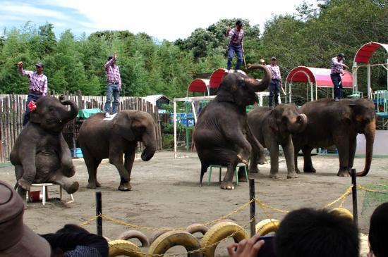 Ichihara, Japón: 象がタップリ堪能できます。