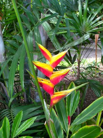 Haleakala Bed and Breakfast: Tropical Flowers