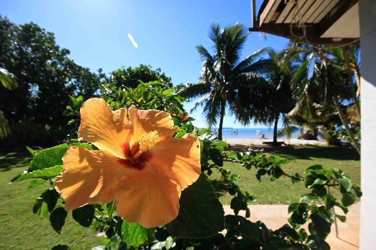 Maupiti Island, Polinesia Francesa: jardin