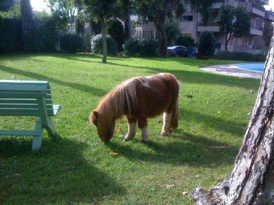 """Relais La Canfora: la piccola Pony """"Bea"""""""