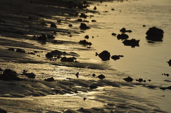 Hotel Tugu Lombok : sunset on the beach 2