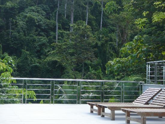 Sea View Resort & Spa Koh Chang: Blick vom oberen Pool in den Wald