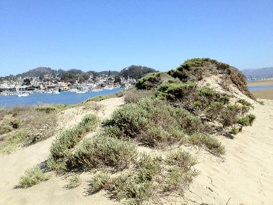 "BEST WESTERN PLUS Shore Cliff Lodge: ""Sarge"" took us out to Morro Strand"