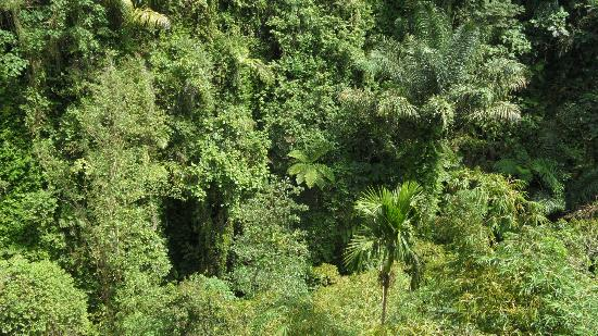 Bidadari Private Villas & Retreat: rain forest